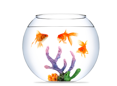 3-goldfish