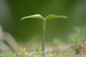 plant-951135_1920